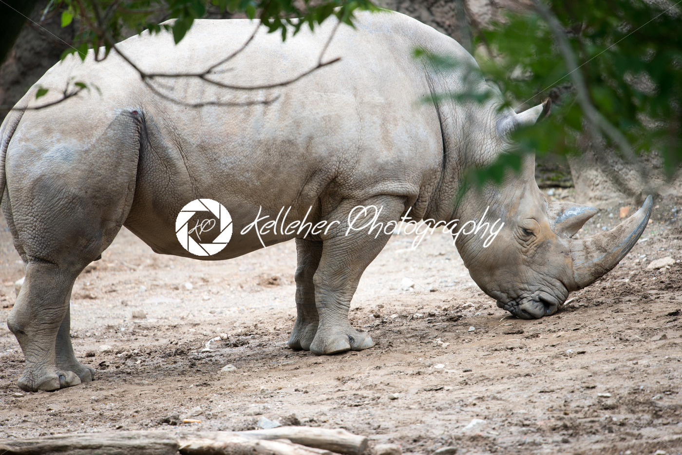 PHILADELPHIA, PA – MAY 30: Philadelphia Zoo, Amercia's First Zoo, wildlife refuge and zoological garden on May 30, 2017 - Kelleher Photography Store