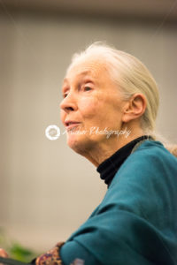 Rosemont, PA – September 15: Dr. Jane Goodall speaks at The Agnes Irwin School in Rosemont on September 15, 2015 - Kelleher Photography Store
