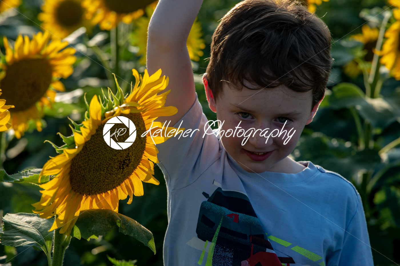 Beauty joyful young boy with sunflower enjoying nature and laughing on summer sunflower field. Sunflare, sunbeams, glow sun. Backlit. - Kelleher Photography Store