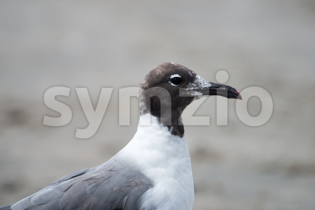 Closeup view of a Seagull on Beach Stock Photo