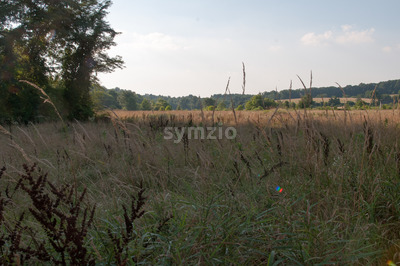 Green open space with mature trees on a sunny day with light clouds at Stroud Preserve Stock Photo