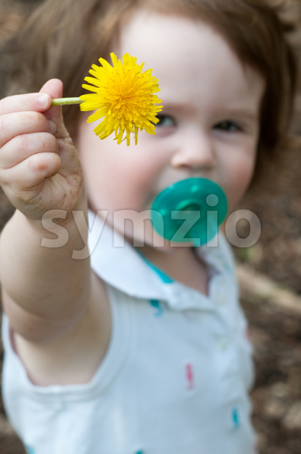 Young toddler girl holding up a dandelion Stock Photo