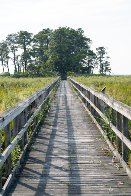 Boardwalk through marsh reeds near Rock Hall, MD Stock Photo