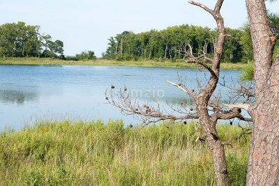 Thickets of reeds and Chesapeake Bay on Maryland Eastern Shore near Rock Hall, MD Stock Photo