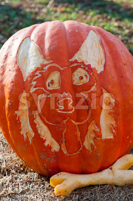 CHADDS FORD, PA - OCTOBER 26: Dog and Bone Pumpkin at The Great Pumpkin Carve carving contest on October 26, 2013 Stock Photo