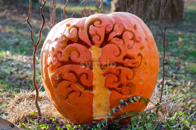 CHADDS FORD, PA - OCTOBER 26: Tree Pumpkin at The Great Pumpkin Carve carving contest on October 26, 2013 Stock Photo