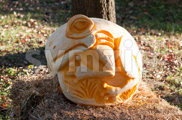 CHADDS FORD, PA - OCTOBER 26: Tree Frog Pumpkin at The Great Pumpkin Carve carving contest on October 26, 2013 Stock Photo