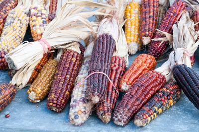 Decorative corn on the autumn market Stock Photo