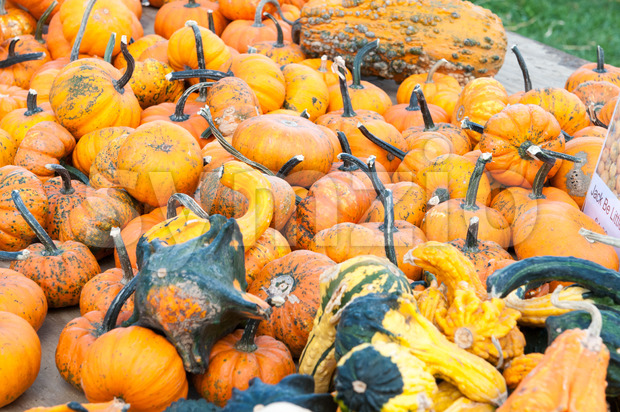 Various Pumpkins and other gourds on table during fall Stock Photo