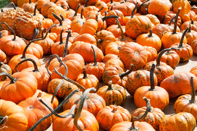 Various Pumpkins on table during fall Stock Photo