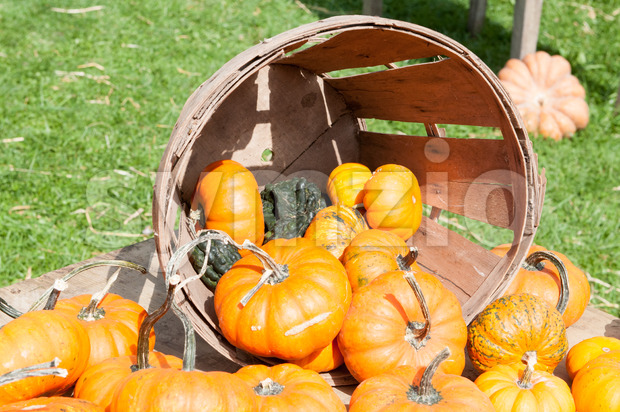 View of Various Pumpkins and other gourds in basket on table during fall