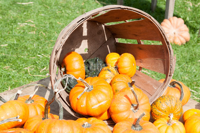 Various Pumpkins and other gourds in basket on table during fall Stock Photo