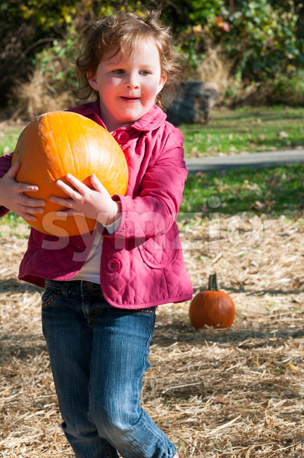 Young toddler girl outside holding a pumpkin with pumpkin fields in the background Stock Photo