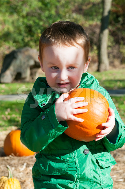 Young toddler boy outside holding a pumpkin with pumpkin fields in the background Stock Photo
