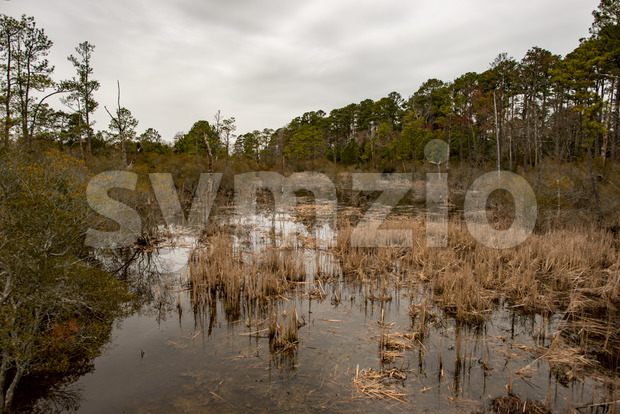 Swamp lake and trees in Jamestown, Virginia Stock Photo