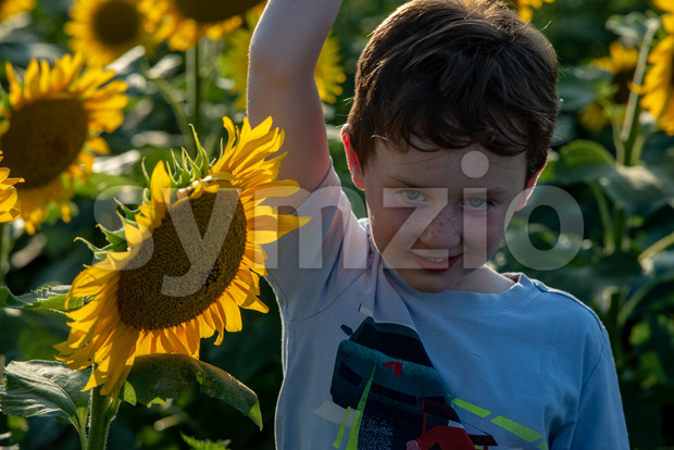 Beauty joyful young boy with sunflower enjoying nature and laughing on summer sunflower field. Sunflare, sunbeams, glow sun. Backlit. Stock Photo