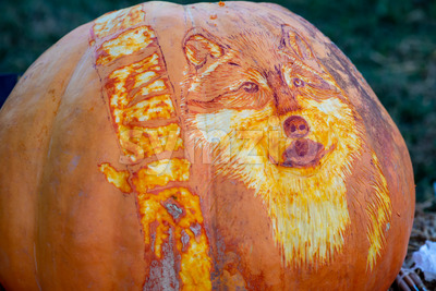 CHADDS FORD, PA - OCTOBER 18: Wolf carving at The Great Pumpkin Carve carving contest on October 18, 2018 Stock Photo